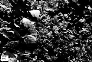 Fotografia SEM di micro-prelievo di matrice bronzea
